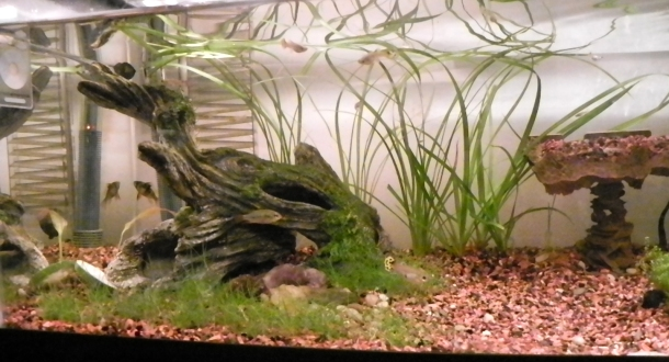 Full view of my 20 gal long. I have a DIY Co2 system, dwarf hairgrass, dwarf baby tears, kyoto grass, an amazon sword (out of the pic) and a mystery tall plant (jungle val maybe? Or spiralis? HELP!)